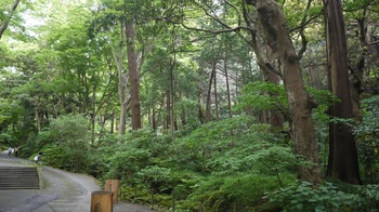 妙本寺の杜.jpg