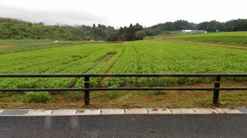 蕎麦畑.jpg